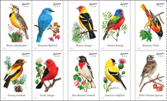 SongbirdsForever